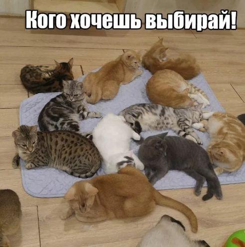 фото приколы про котов (4)