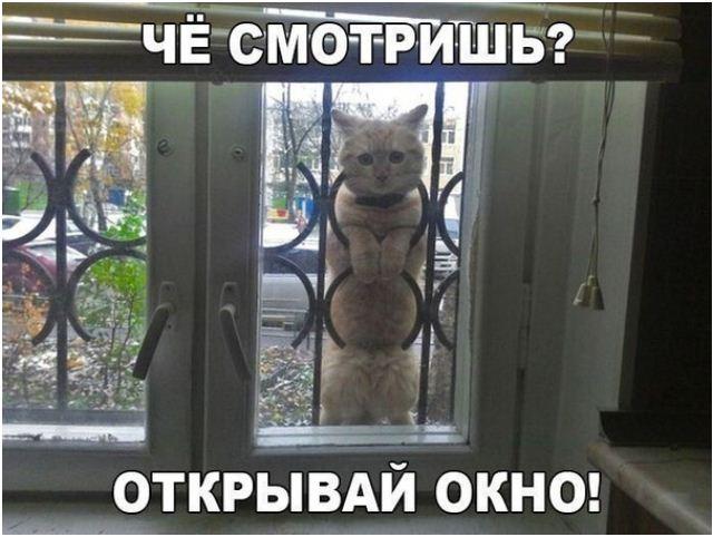 фото приколы про котов (5)