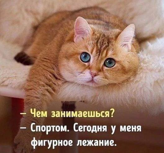 фото приколы про котов (6)