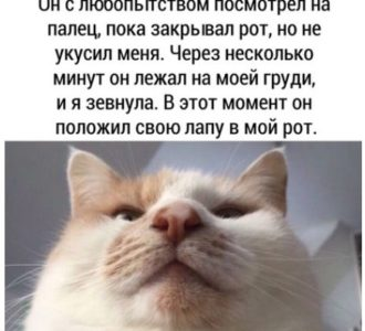 фото приколы про котов (7)