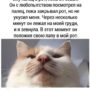 Коты фото приколы — самые смешные картинки про кошек с надписями