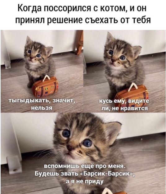 фото приколы про котов (8)