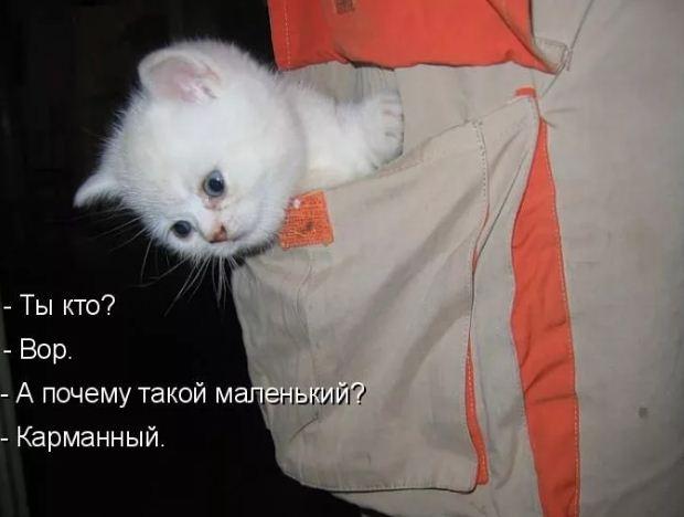 фото приколы про котов (9)