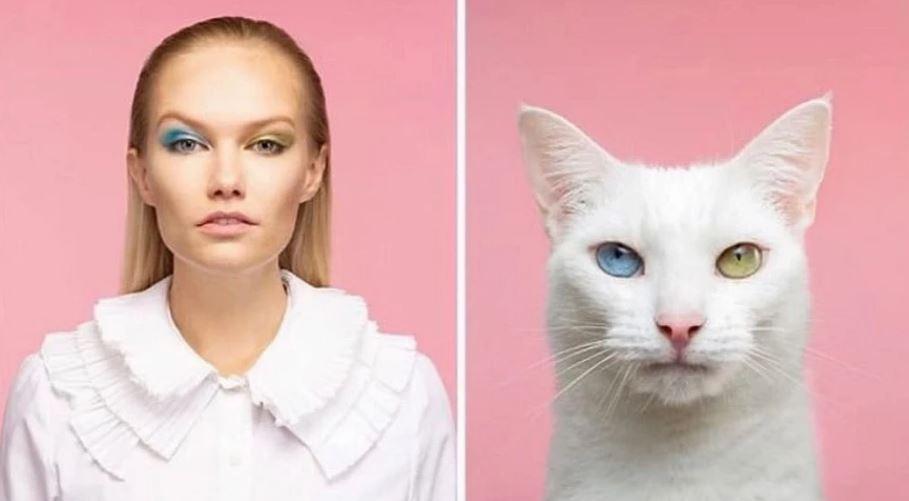 кошки похожие на хозяев (10)