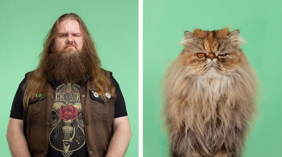 кошки похожие на хозяев (15)
