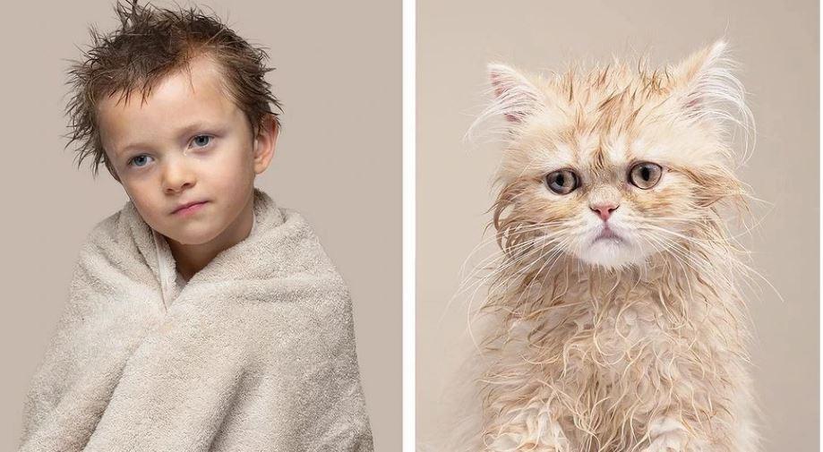 кошки похожие на хозяев (2)