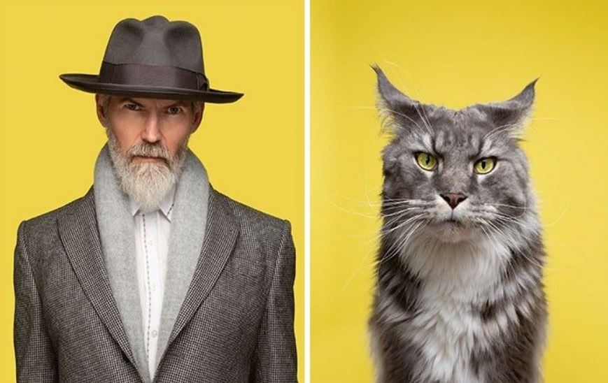 кошки похожие на хозяев (21)