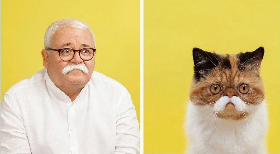 кошки похожие на хозяев (4)