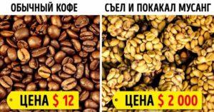 Дорогие продукты для богатых
