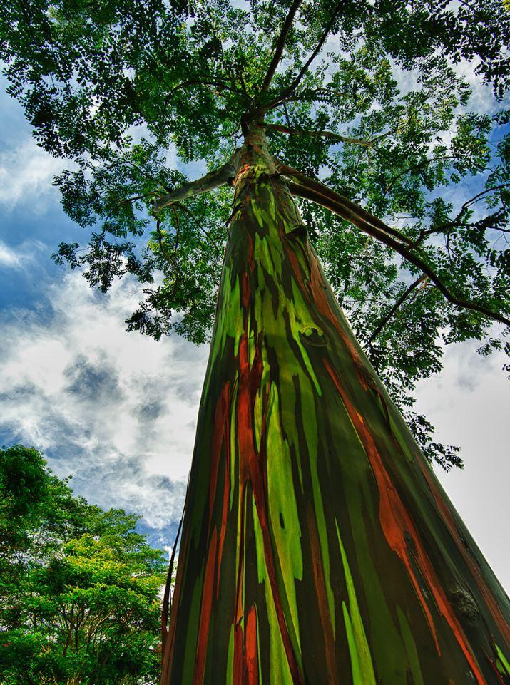 16 самых красивых деревьев в мире — фото с названиями