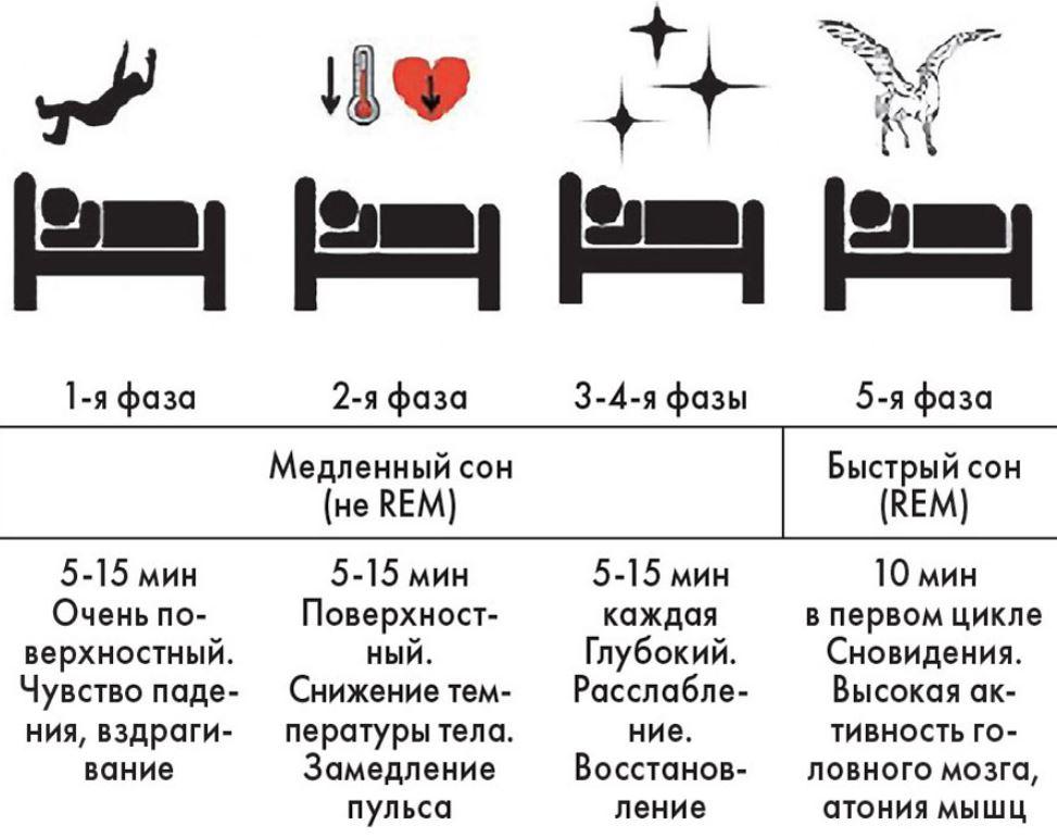 фазы сна 2