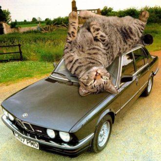 Прикольные фото котов 1