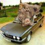 Гигантские кошки захватывают мир, сюрреалистические коллажи фотографа Мэтта Маккарти