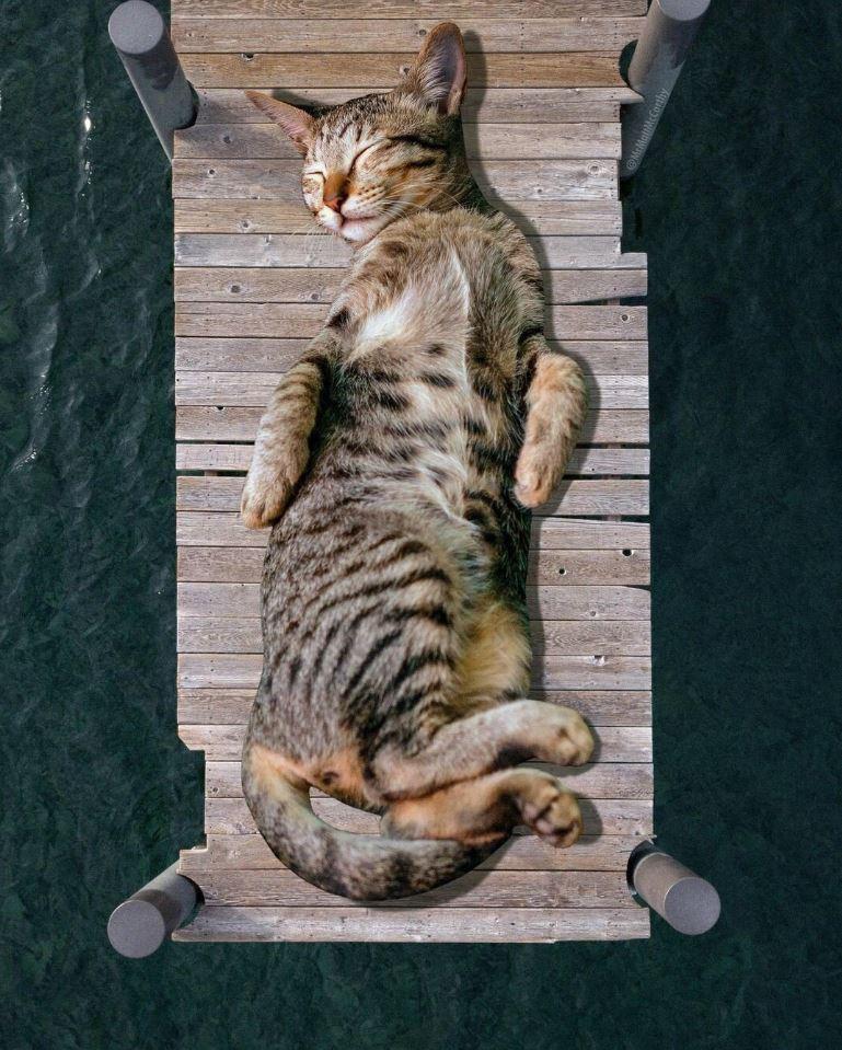 Прикольные фото котов (12)