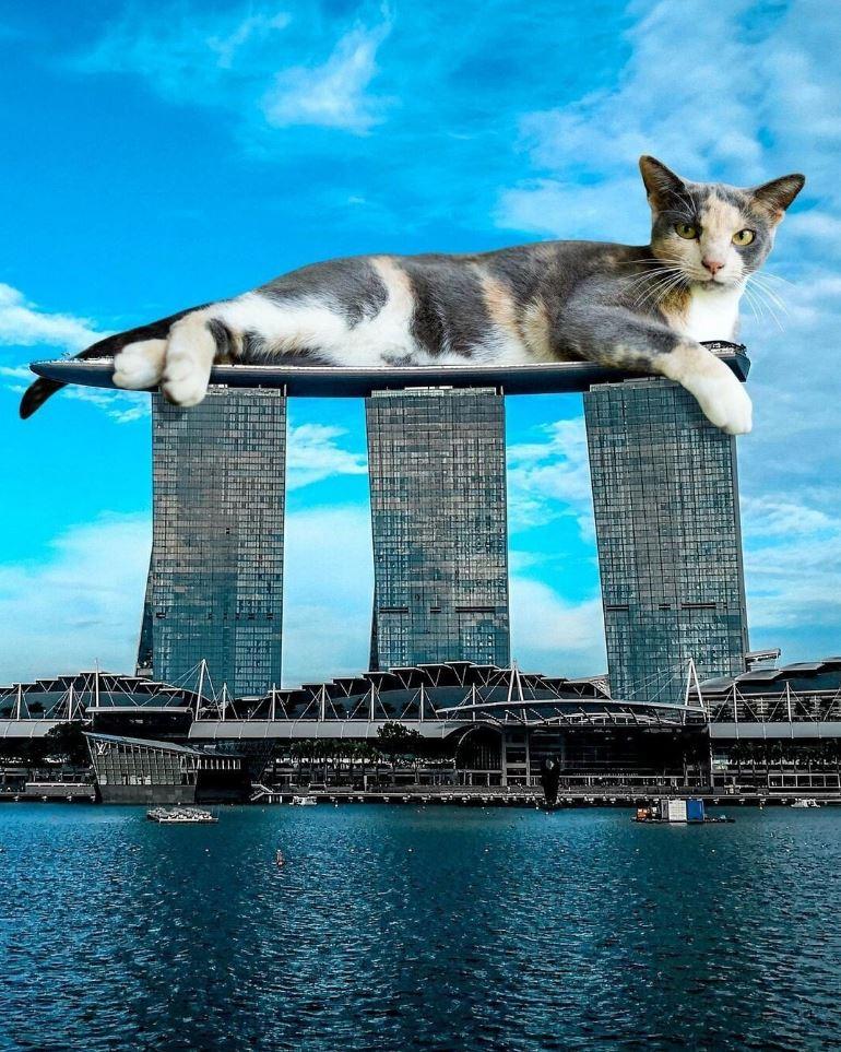 Прикольные фото котов (15)