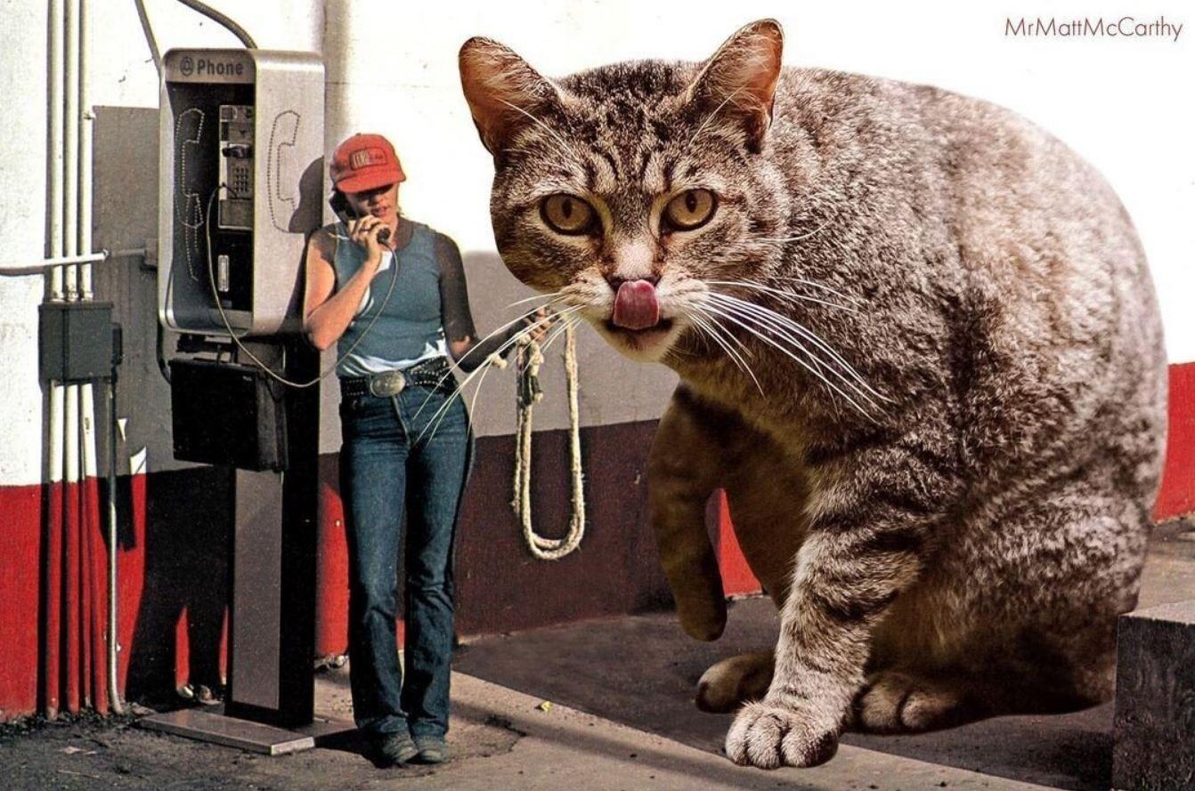Прикольные фото котов (18)