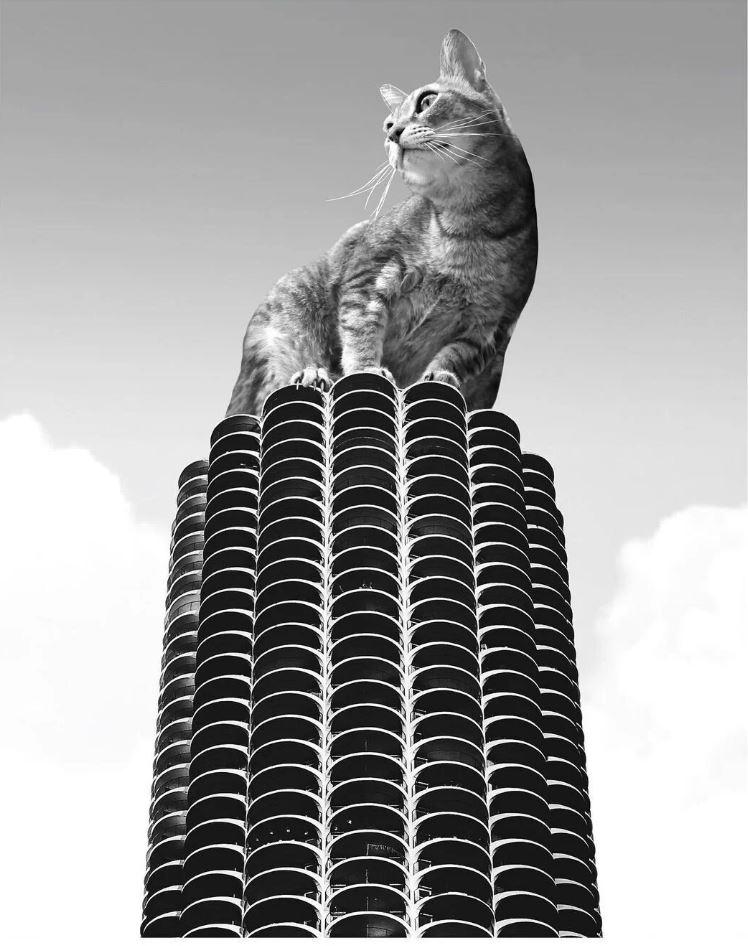 Прикольные фото котов (2)