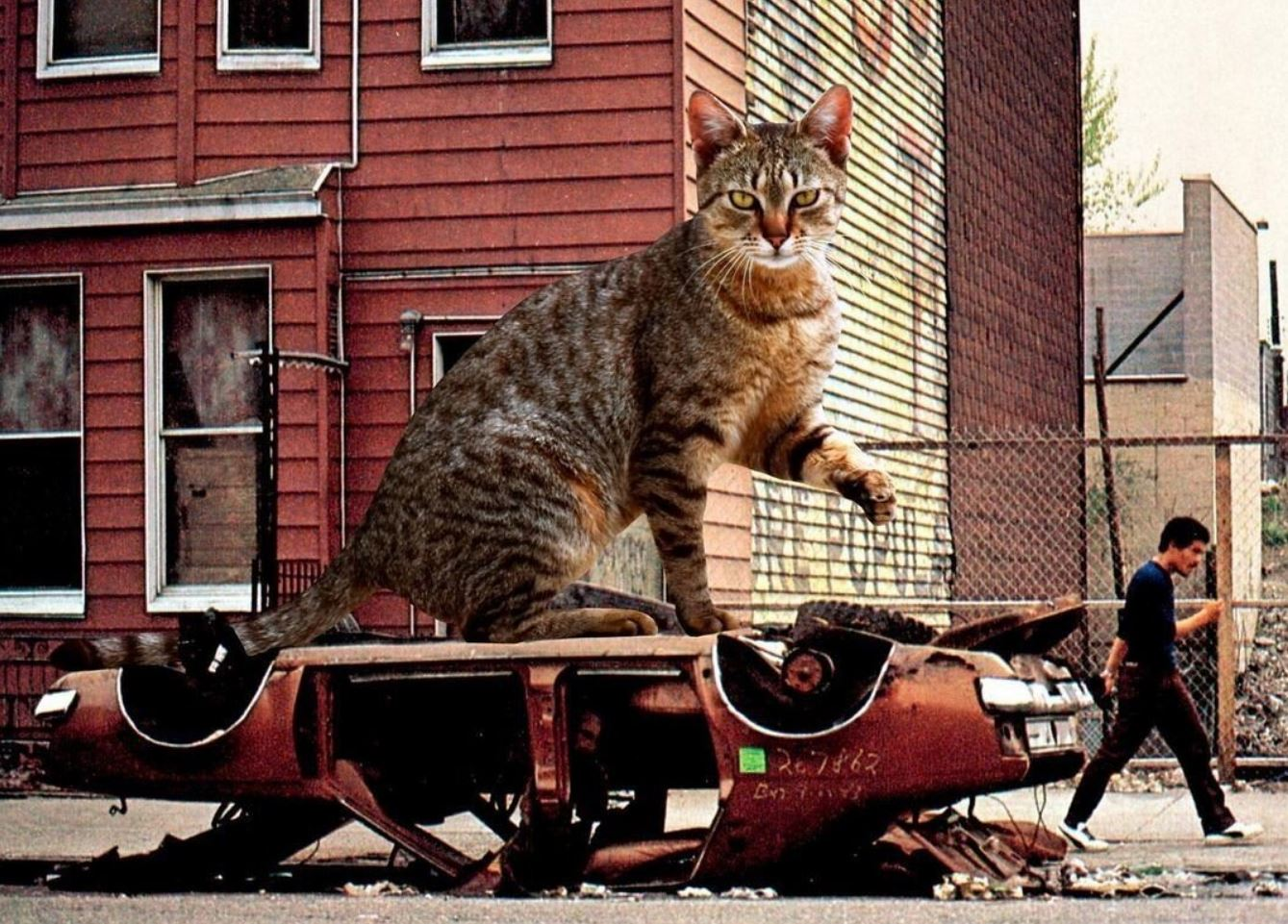 Прикольные фото котов (4)