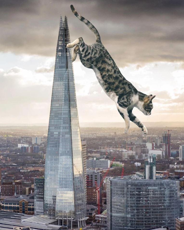 Прикольные фото котов (5)