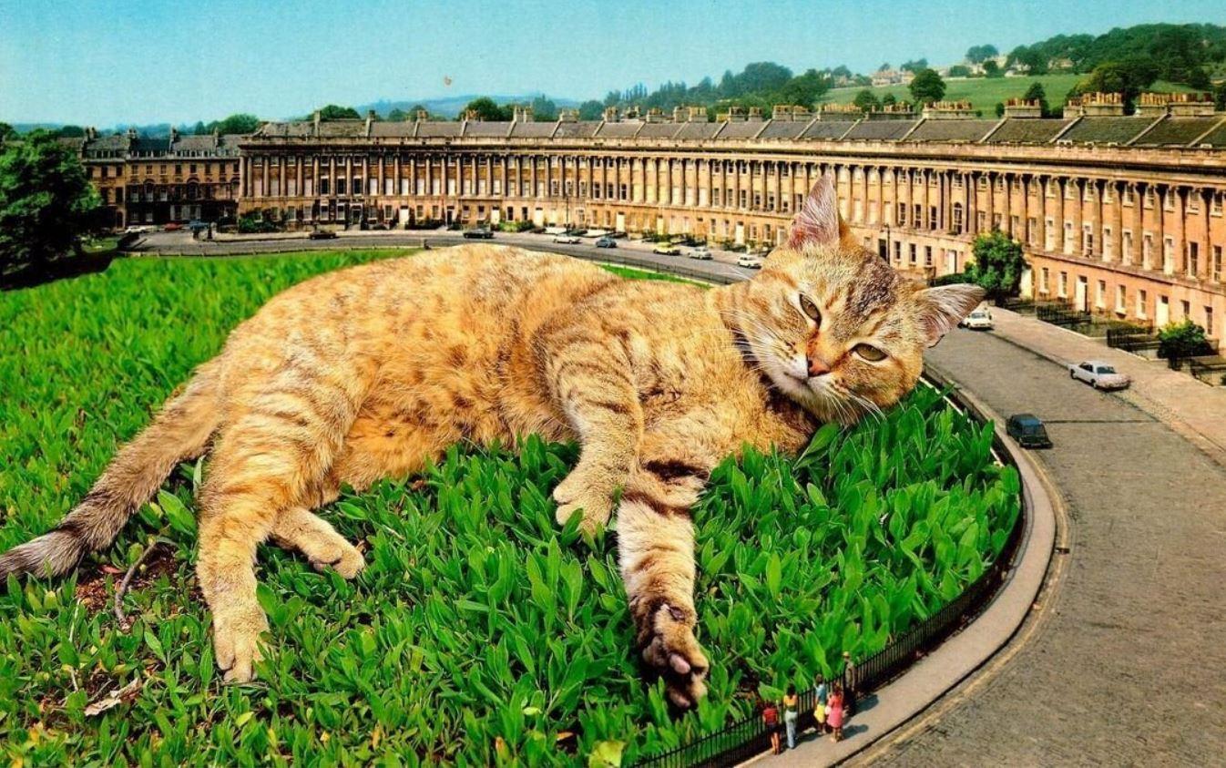 Прикольные фото котов (6)