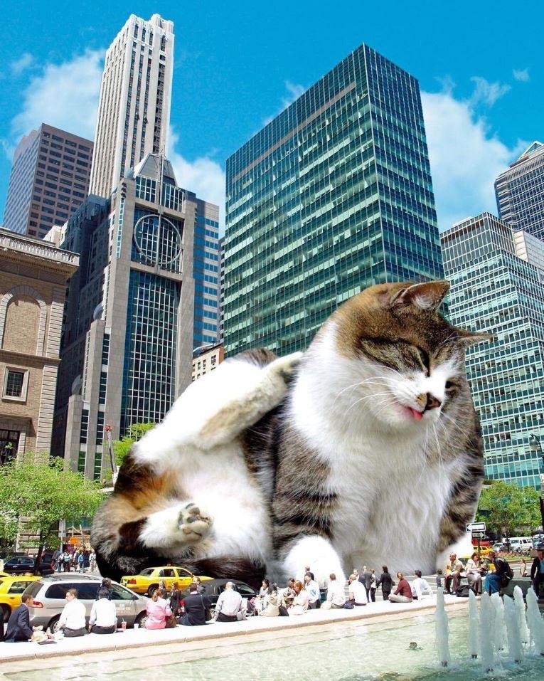 Прикольные фото котов (7)