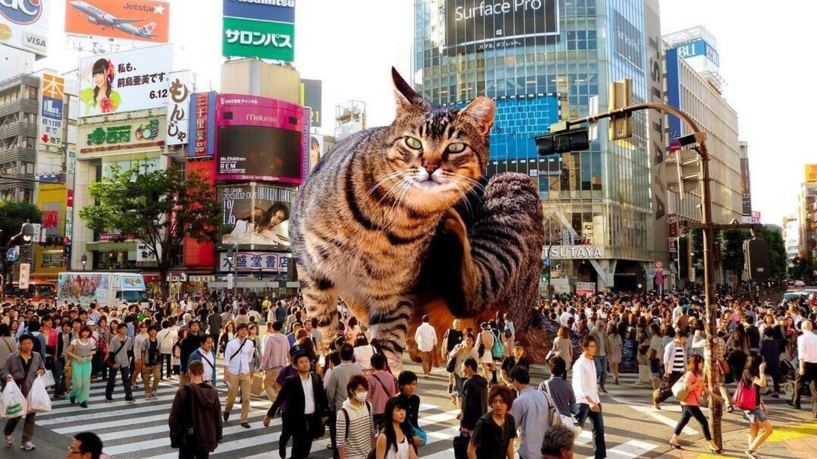 Прикольные фото котов (8)