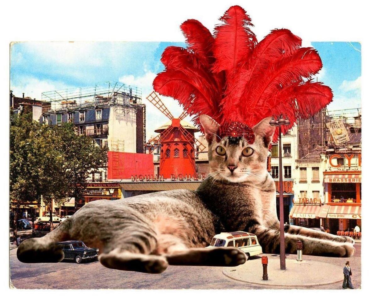 Прикольные фото котов (9)