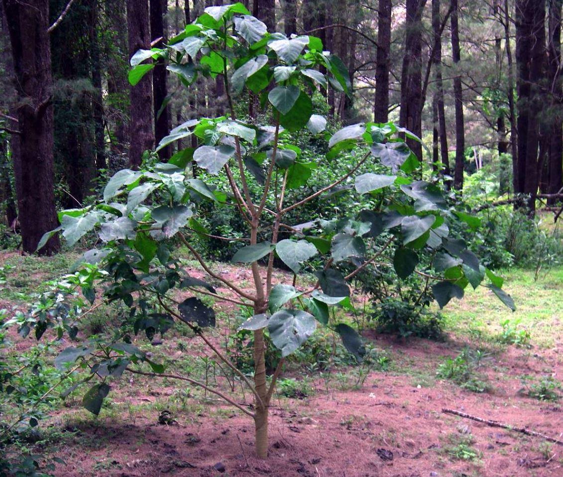 Жалящее дерево 1