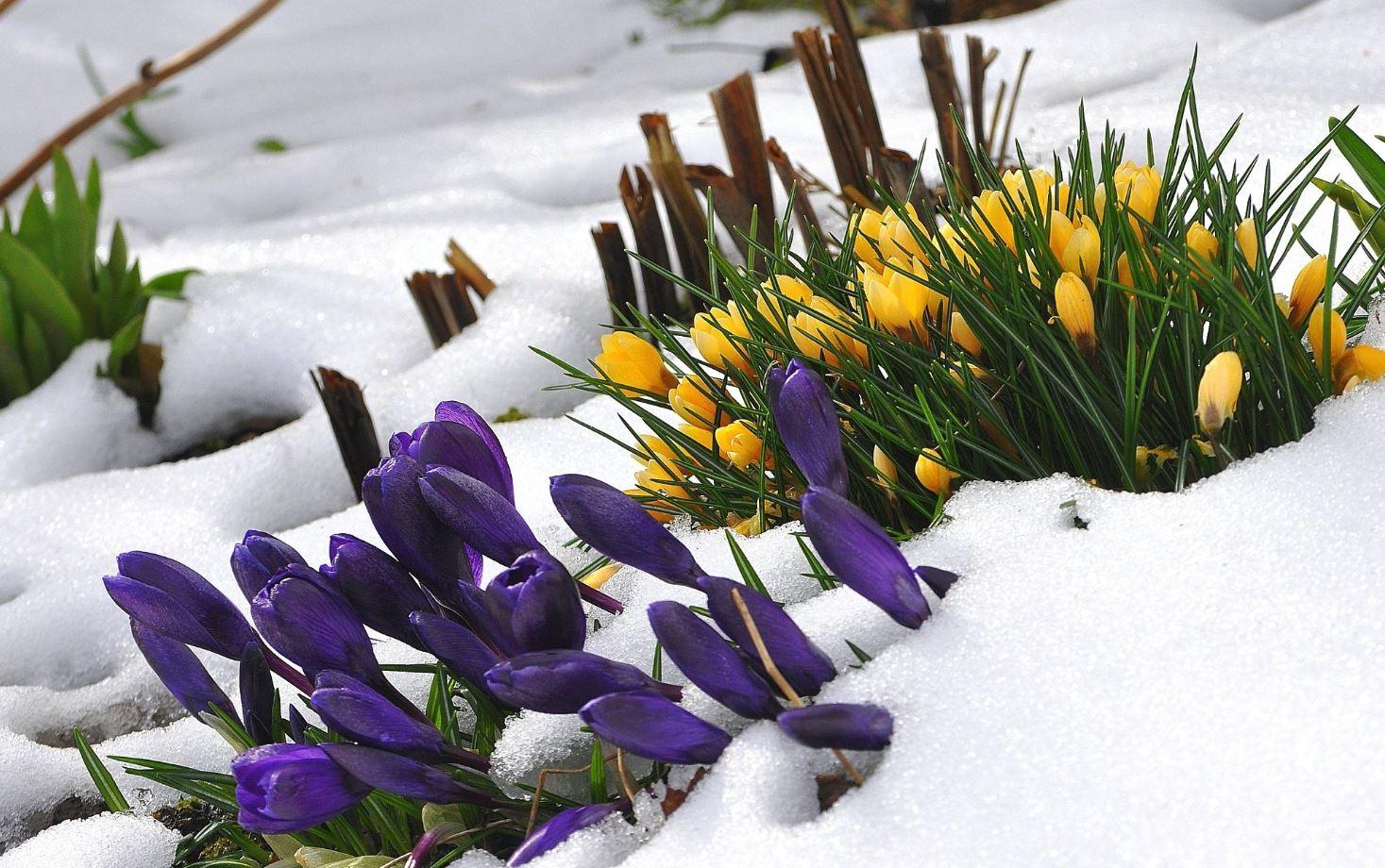 Картинки весна (10)