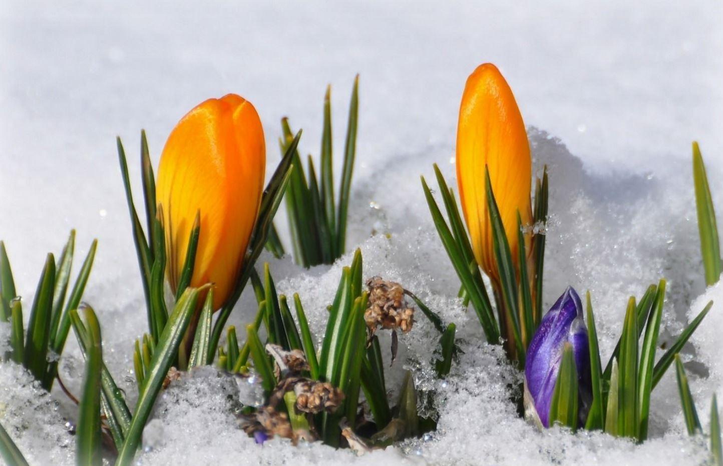 Картинки весна (11)
