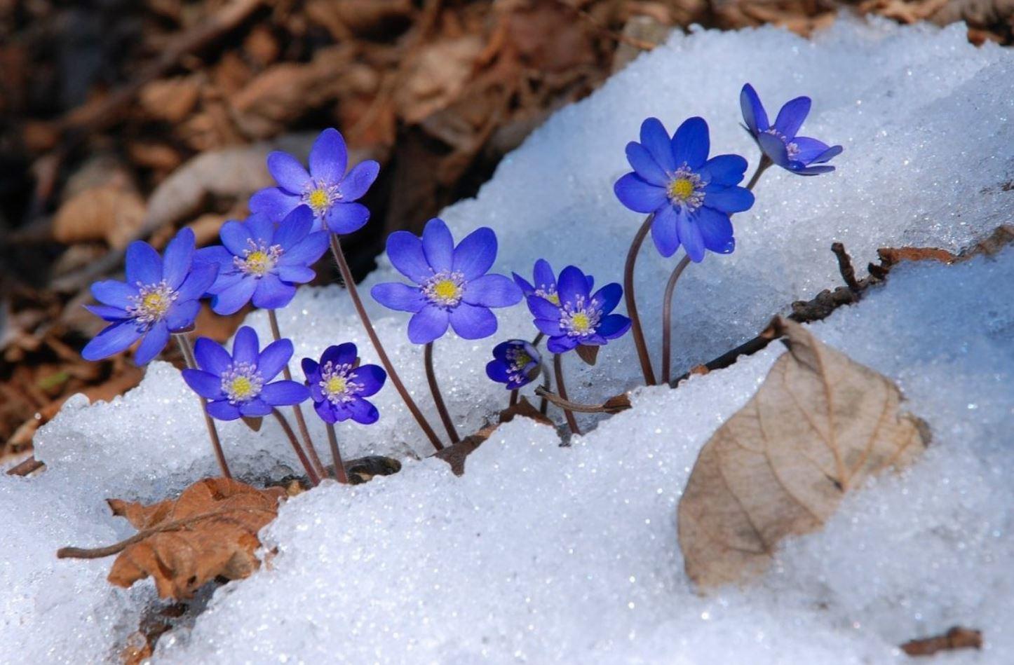 Картинки весна (12)