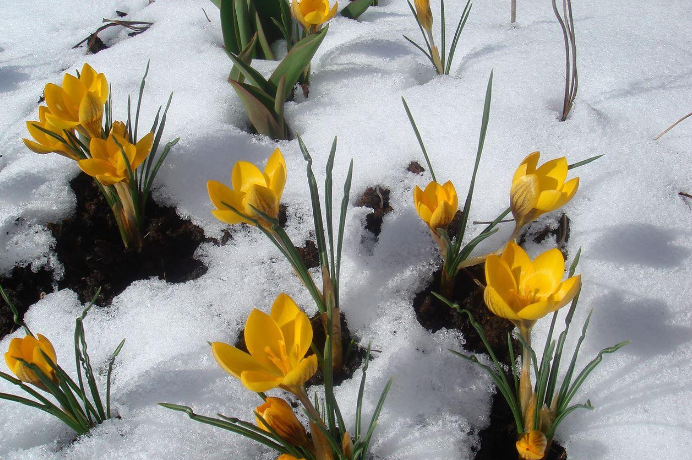 Картинки весна (13)