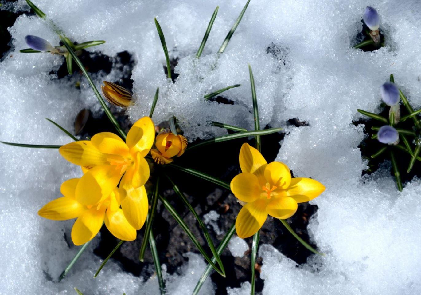 Картинки весна (14)