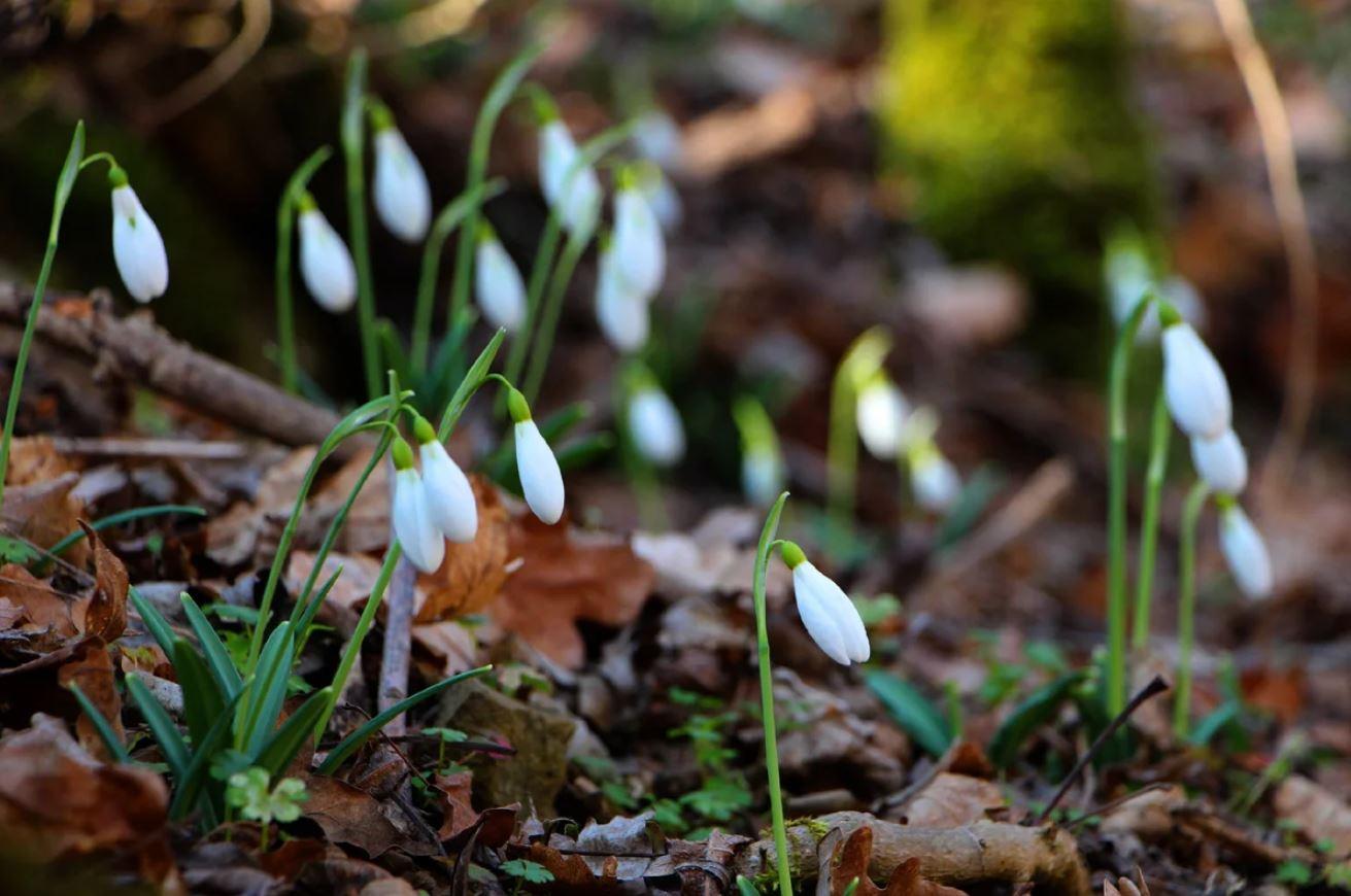 Картинки весна (15)