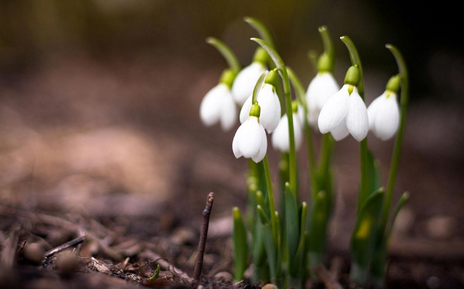 Картинки весна (16)