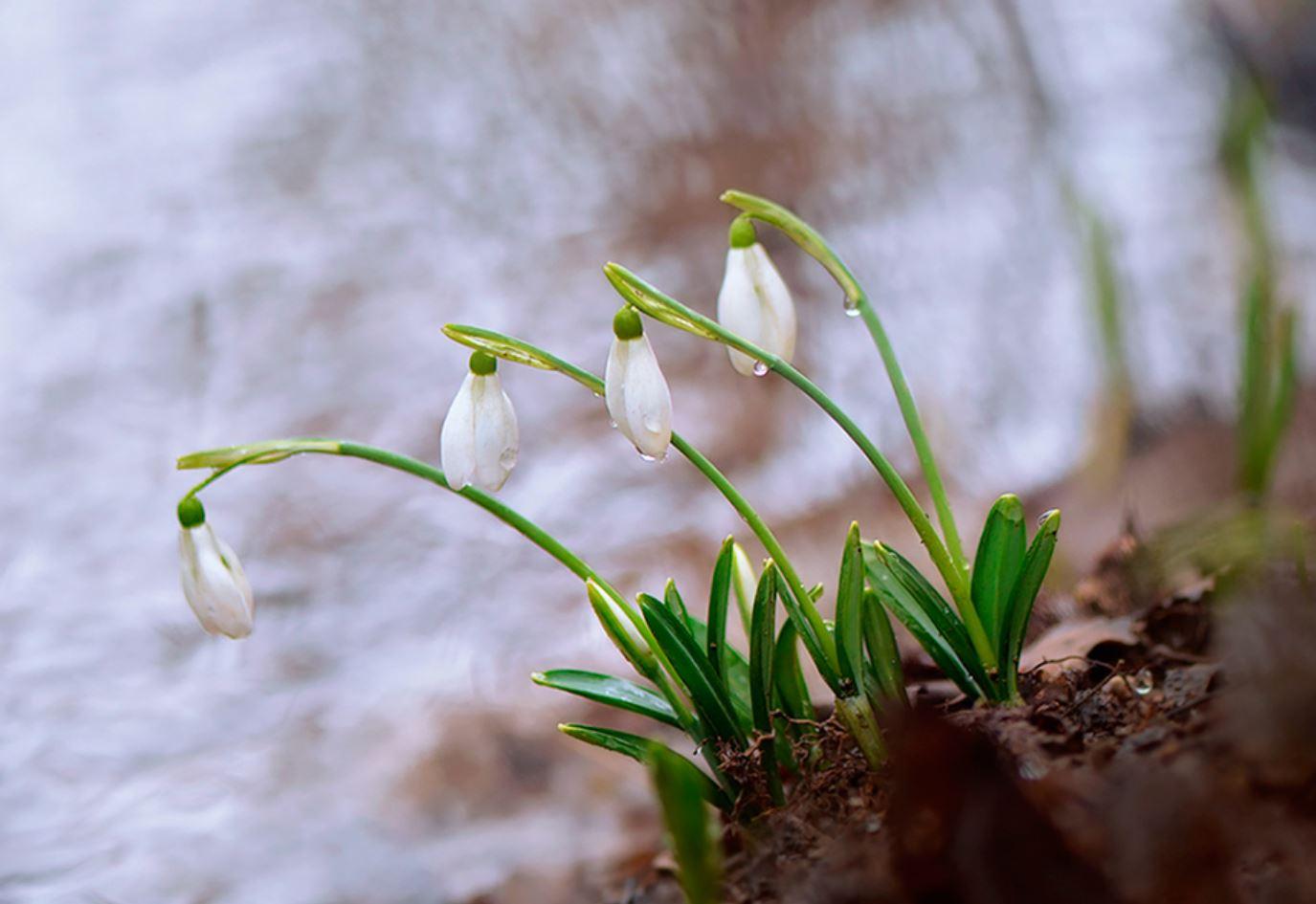 Картинки весна (17)