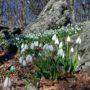 Смотрите! Картинки «Весна» красивые пейзажи весенней природы