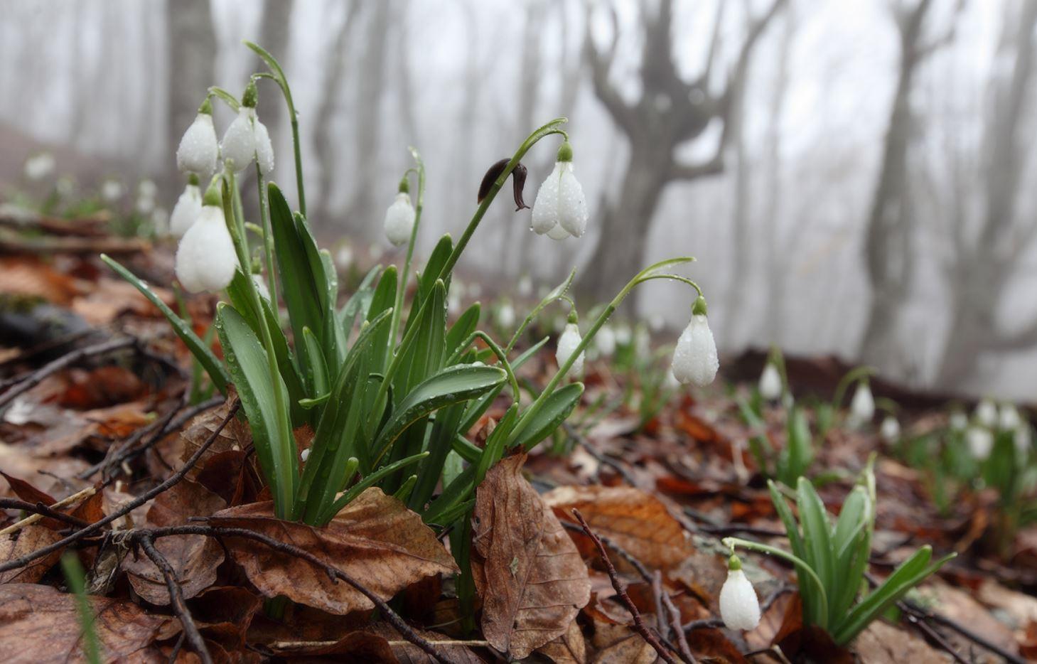 Картинки весна (2)