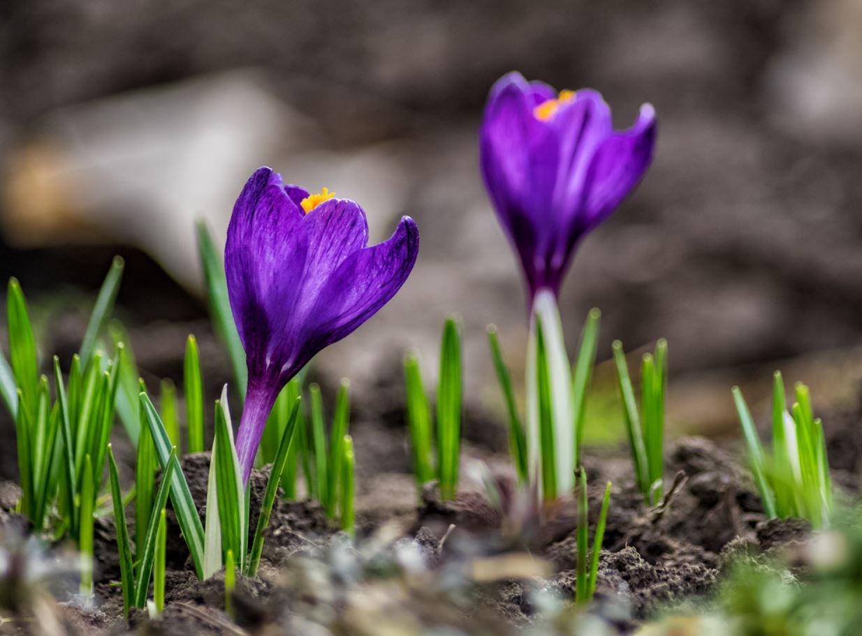 Картинки весна (22)