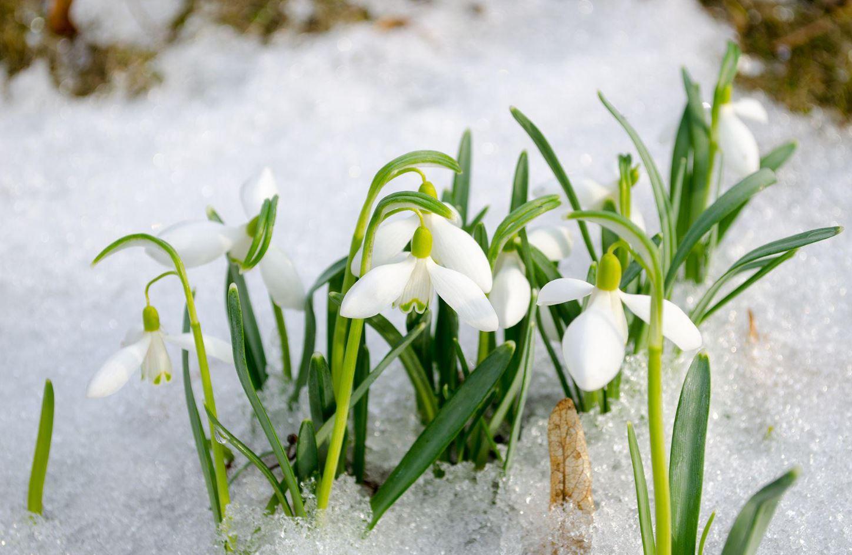 Картинки весна (4)