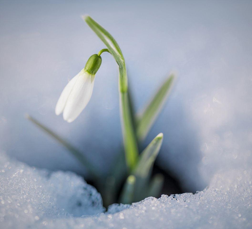 Картинки весна (8)