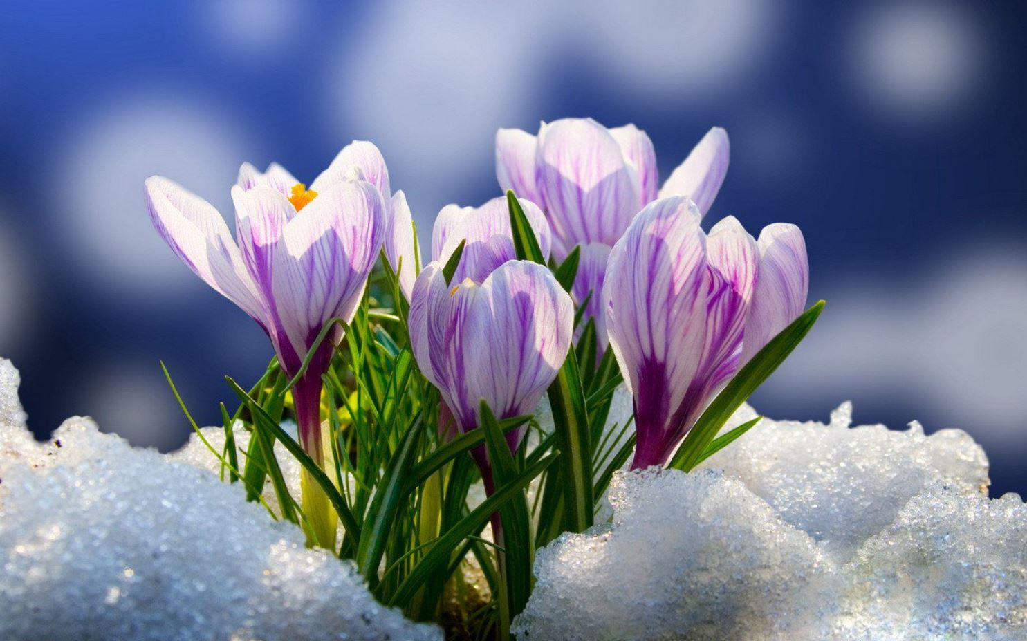 Картинки весна (9)