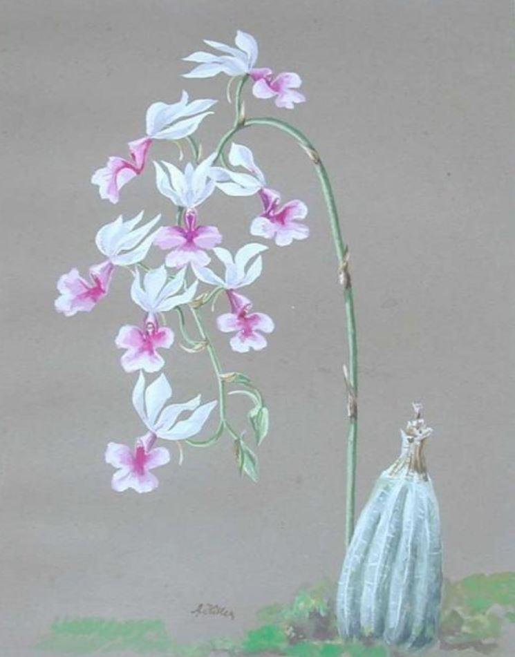 Белые орхидеи (1913).