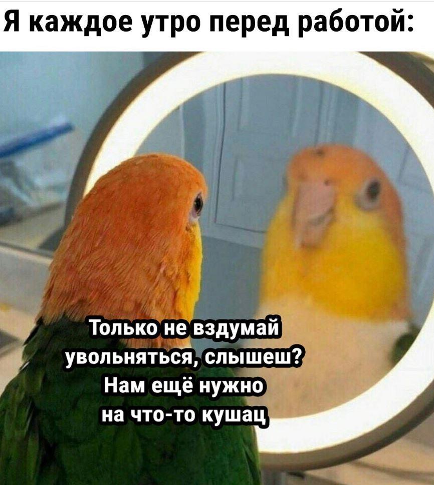 Картинки смешные с надписями (10)