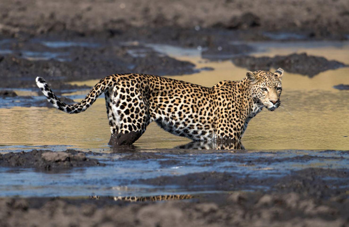 Фото леопарда 3