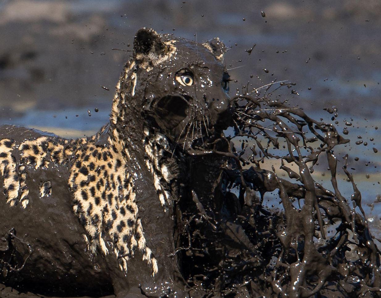 Фото леопарда 5