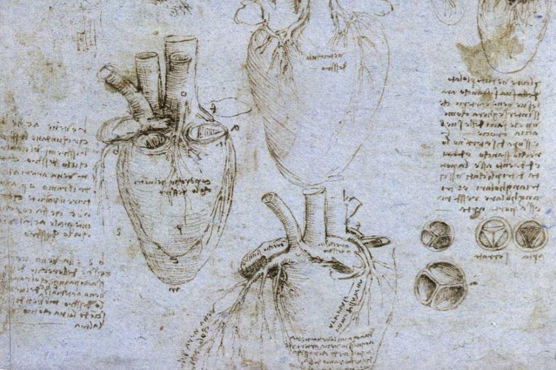 леонардо да винчи анатомия сердце