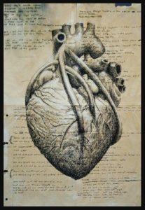 трабекулы сердца (2)