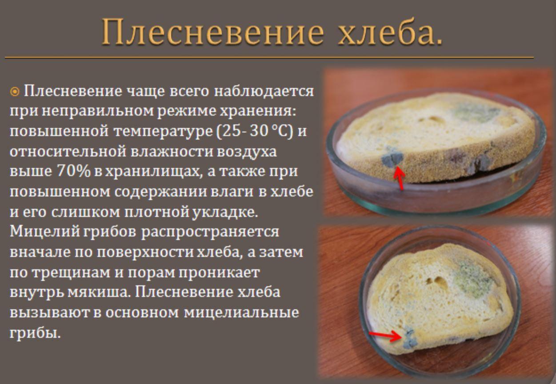 съесть хлеб с плесенью (2)