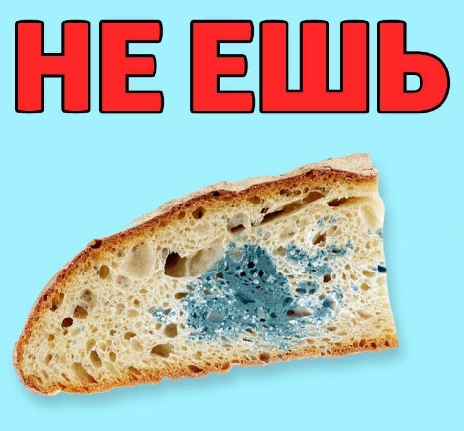 съесть хлеб с плесенью (4)